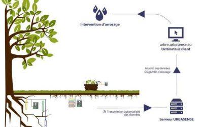 (Français) Un système d'arrosage intelligent pour les jeunes arbres à Saint-Gilles