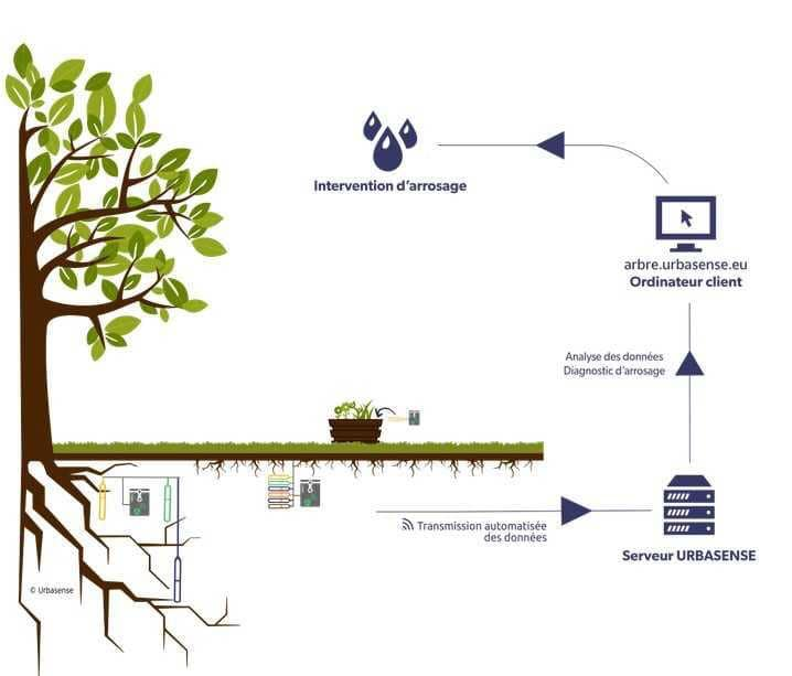 Un système d'arrosage intelligent pour les jeunes arbres à Saint-Gilles